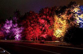 Crea ambientes diferentes con los proyectores de suelo RGB